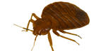 bed-bug-exterminator-services