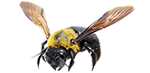 bees exterminator services in michigan