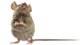 mouse pest control exterminator service in michigan
