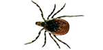 ticks removal and bug exterminator services in michigan