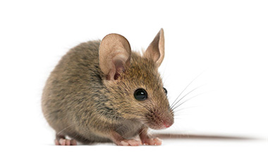 Pest Control Exterminator and Mice Removal Services Troy MI