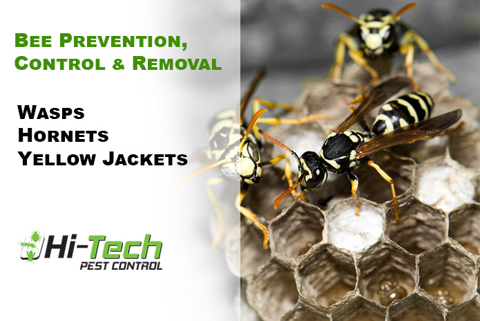 Yellow Jackets and Their Sting
