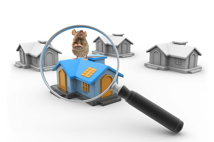 House Mice Problems?