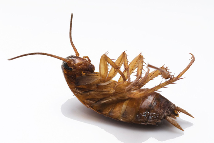 Michigan Pest Control – Get Rid of Cockroaches!