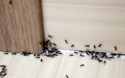 Types of Ants in Michigan | Pest Control Services