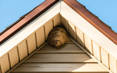 The World of Wasps | Pest Control Services