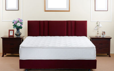 How to Trap Bed Bugs and be Pest Free