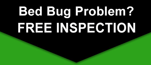Free-Bed-Bug-Inspection