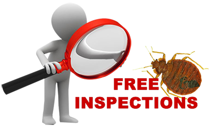 Residential and Commercial Bed Bug Exterminator