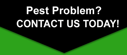 Pest-Control-Problem-contact-us