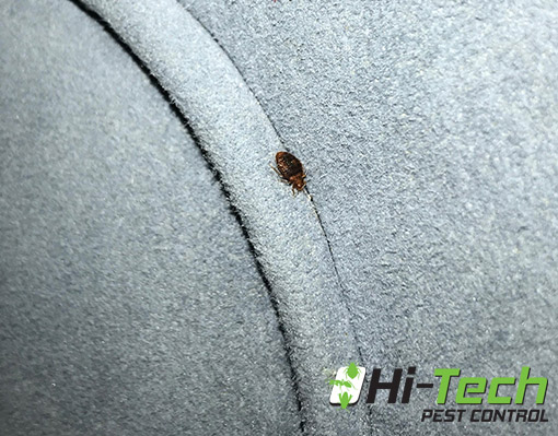 Have you been bitten by a bed bug? Contact Hi-Tech Pest
