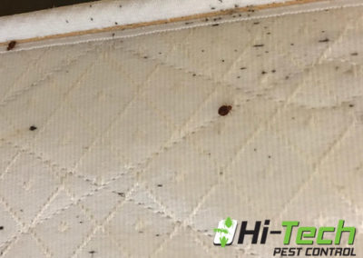 bed-bugs-on-childs-mattress-erradicated-by-hi-tech-pest-control
