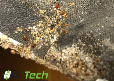 pictures-of-bed-bugs-under-a-bed-mattress-michigan-bed-bug-exterminators
