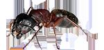 ant exterminator services in michigan