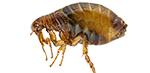 fleas and bug exterminator services in michigan