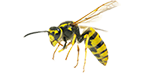 yellow jackets and bees removal and bug exterminator services in michigan