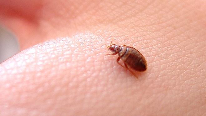 Novi Bed Bugs